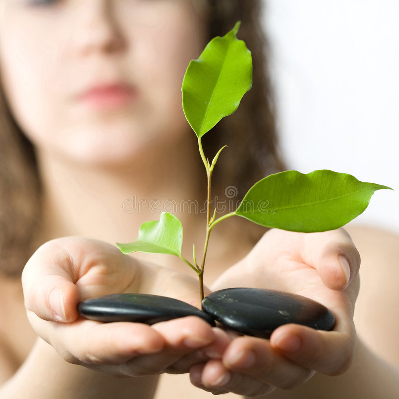 Giving new life. A young naked woman showing a growing green plant between small stones in her hands on white background royalty free stock photos