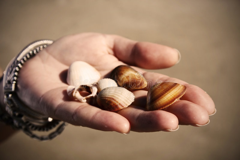 Giving seashells royalty free stock photography