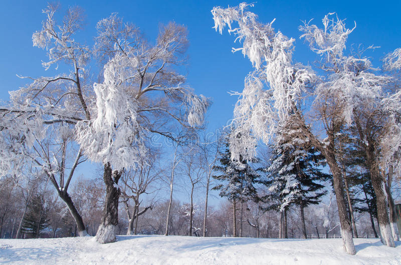 givre image stock