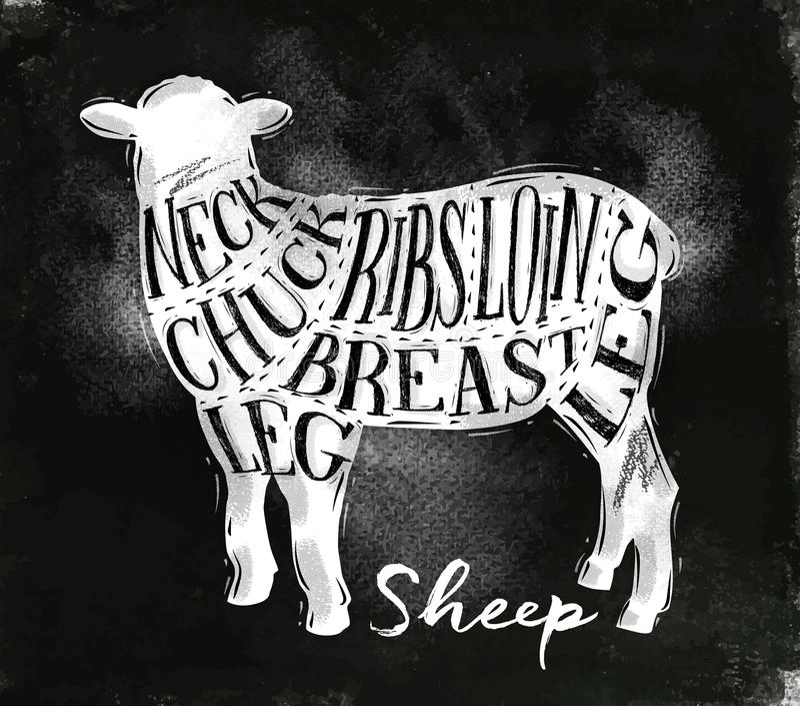 Giz do esquema do corte do cordeiro dos carneiros ilustração stock