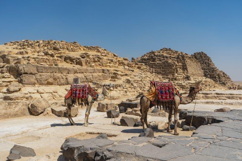 Giza ostrosłupa mały widok z wielbłądami w przedpolu El Kair fotografia stock