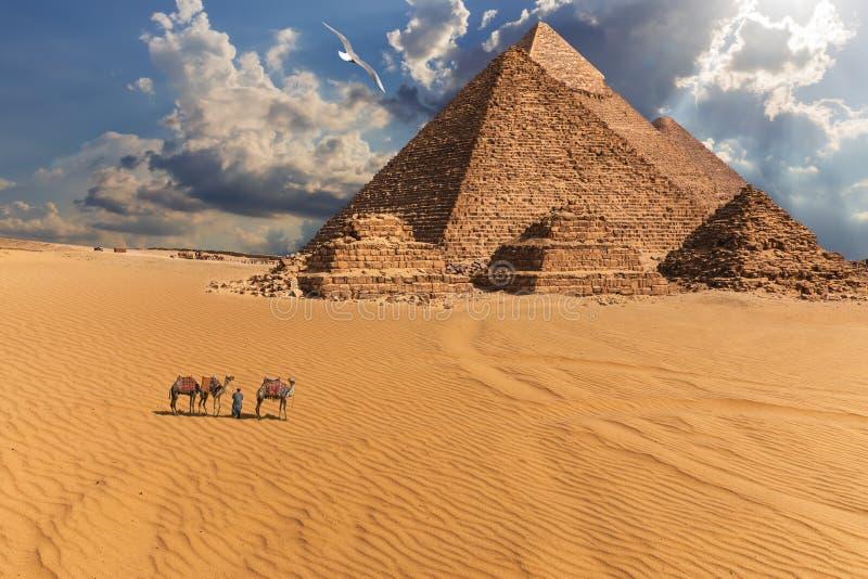 Gizapiramides en kamelen in de woestijn onder de wolken, Egypte stock foto