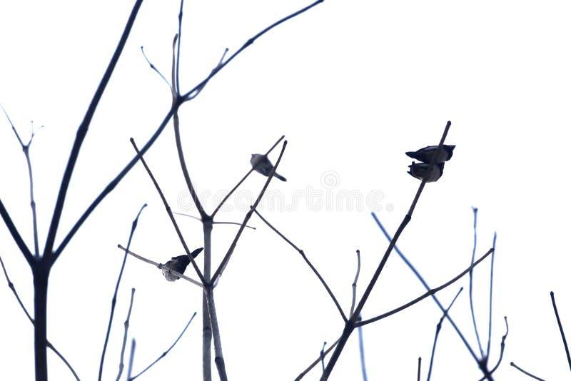 Gjorde suddig en grupp av asiatiska fåglar som sitter på den avlövade trädfilialen royaltyfria foton