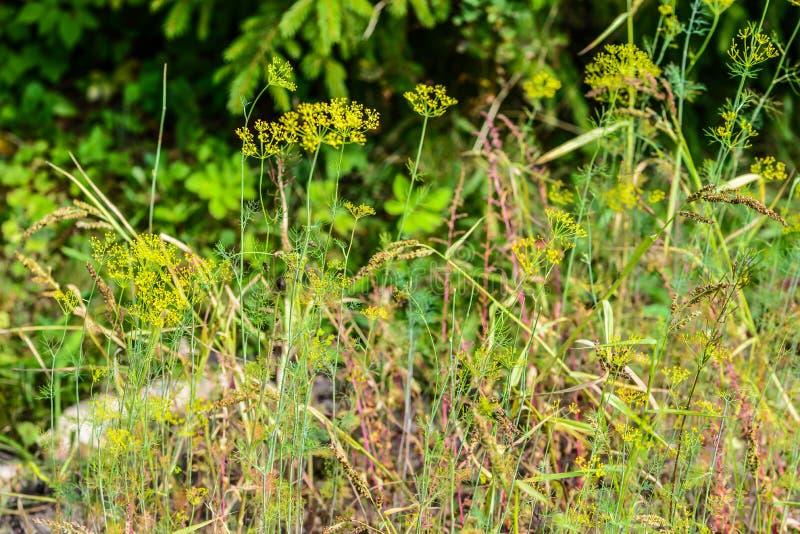 Gjort suddig gräs, ängblommor, flora på gräsmatta i parkerar, arbeta i trädgården arkivbilder