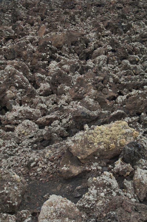 Gjuta av basaltisk lava som täckas med laver arkivfoto