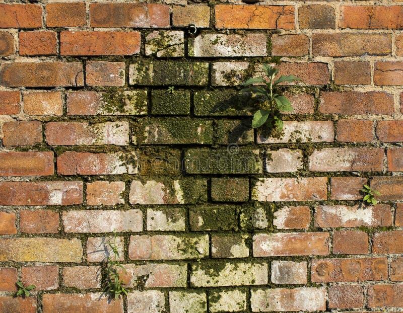 Gjuta på en vägg arkivfoton