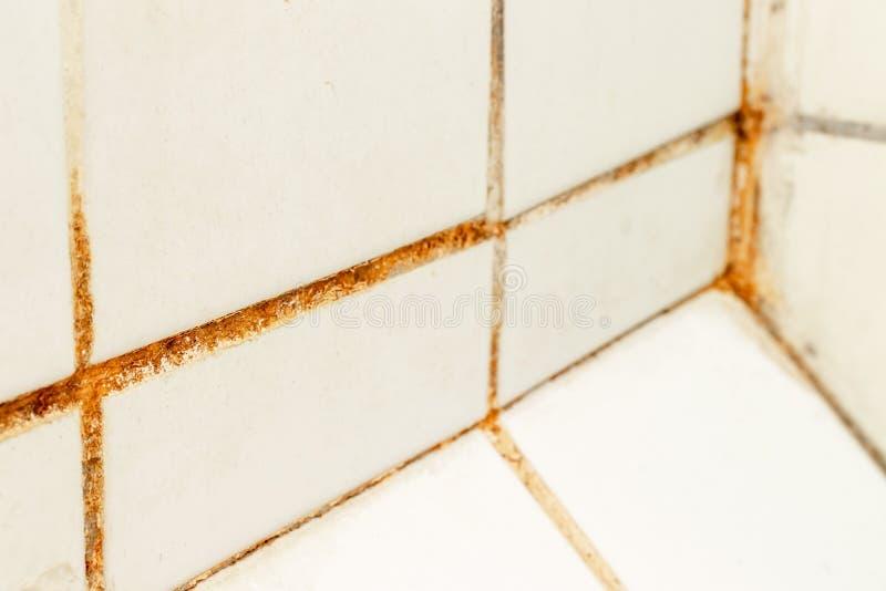 Gjuta svampen och rost som v?xer i tegelplattaskarvar i fuktigt d?ligt ventilerat badrum med h?g fuktighet, wtness, fuktighet och arkivbilder