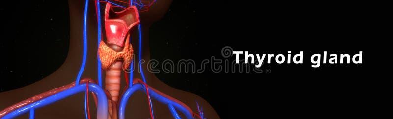 Glándula tiroides stock de ilustración