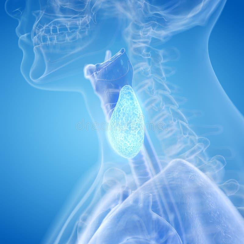 A glândula de tiroide ilustração stock