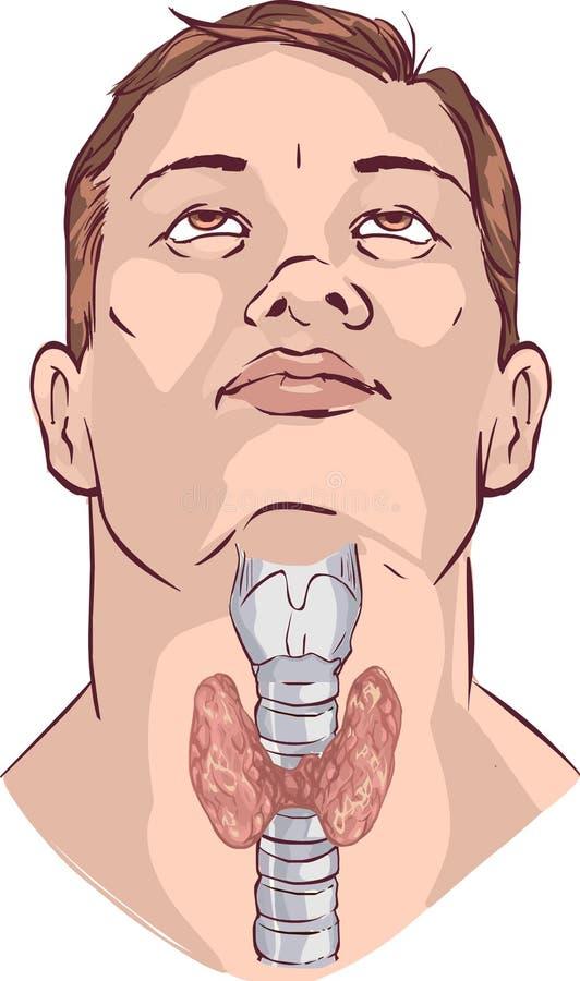 Glândula de tiroide do vetor e laringe ilustração royalty free