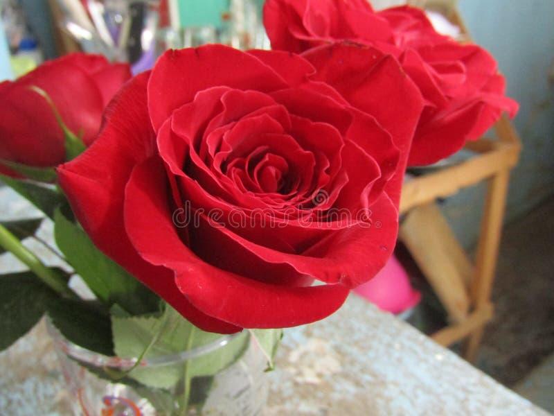 Glädje för röda rosor av den nätta naturliga prydnaden för hem arkivbild
