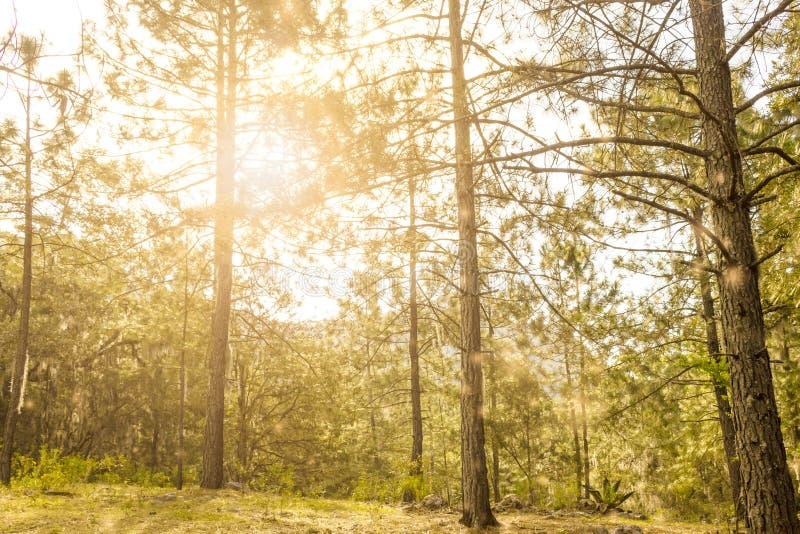Glänsande ho för sol skogträden royaltyfri fotografi