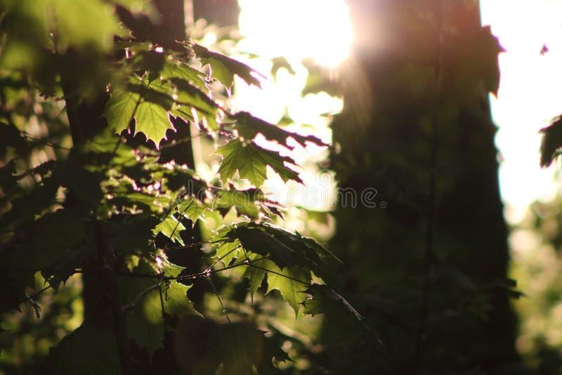 Glänsande ho för sol träden arkivbild