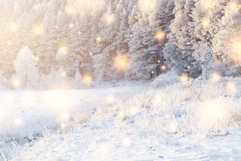 Glänsande magiska snöflingor faller på snöig skog i solljus vita röda stjärnor för abstrakt för bakgrundsjul mörk för garnering m royaltyfri bild