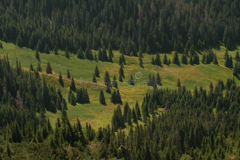 Glänta i skogen - avlägsen sikt arkivfoto