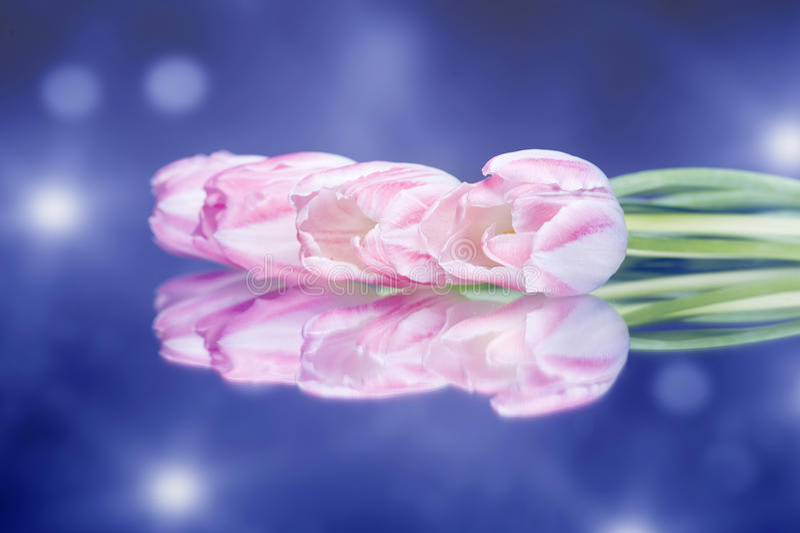 Glänzende Blumen der Tulpe auf dem bunten Hintergrund lizenzfreies stockfoto
