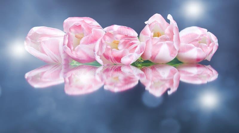Glänzende Blumen der Tulpe auf dem bunten Hintergrund lizenzfreie stockbilder