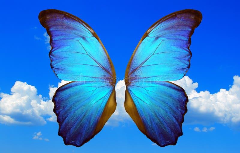 Glänzende Flügel eines blauen morpho Schmetterlinges auf einem Hintergrund des blauen Himmels mit Wolken stockfotografie