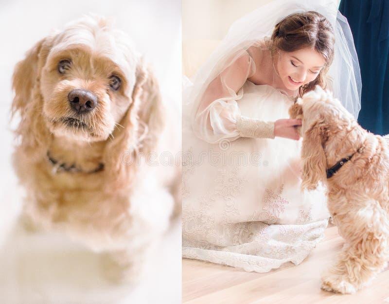 Glänzende junge Brautspiele mit kleinem Hund lizenzfreie stockfotos