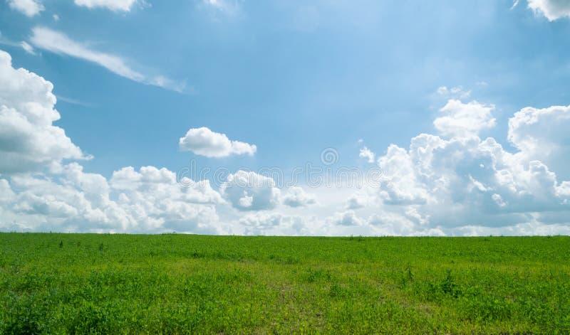 Glänzende Wiese des Sommers mit blauem Himmel und flaumigen Wolken stockfotos