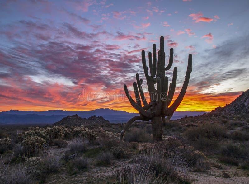 Glänzender Arizona-Sonnenaufgang mit flippigem Kaktus nahe Toms-Daumen trailhead in Scottsdale lizenzfreies stockbild
