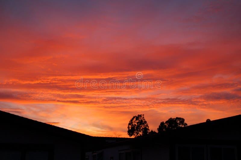 Glänzender Sonnenuntergang mit Bäumen im Vordergrund stockfotografie
