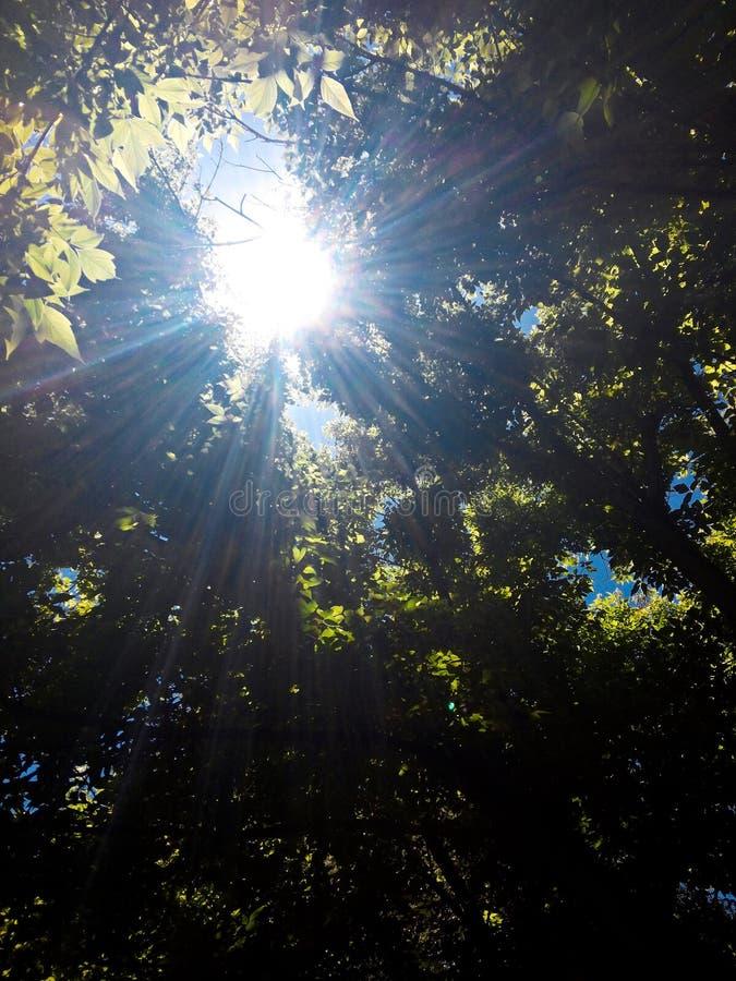 Glänzender Tag Sun stockfoto