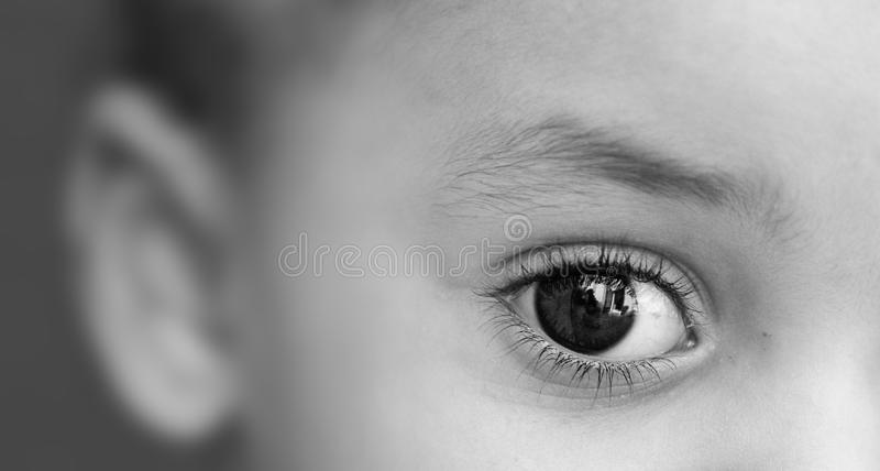 glänzendes Auge im Fokus lizenzfreies stockfoto
