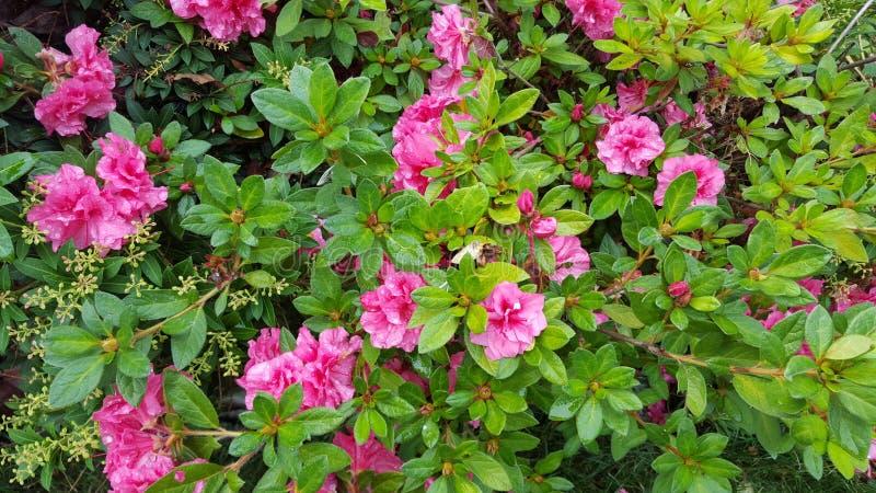 Glänzendes Blumen lizenzfreie stockfotos