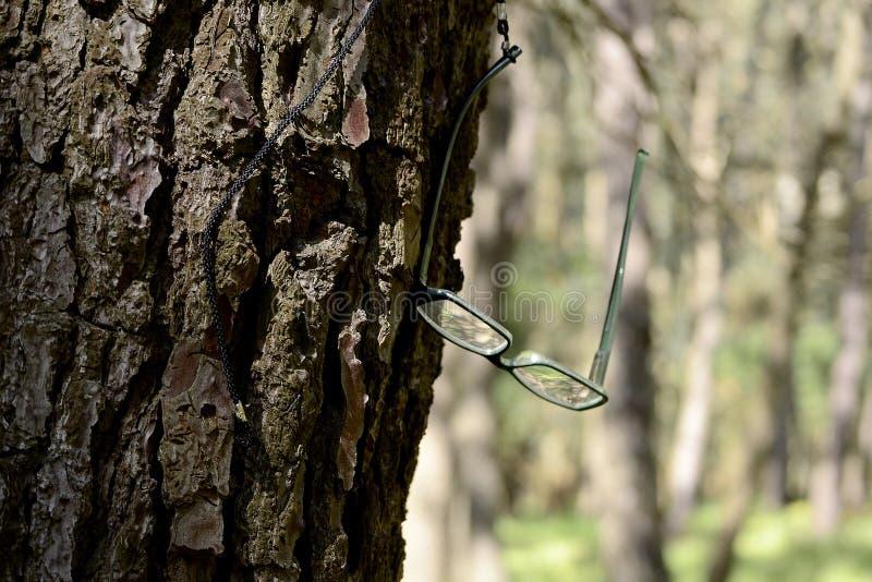 Gläser auf einem Baum stockfotos