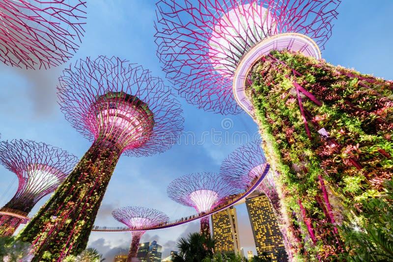 Glättung der Ansicht des Supertree Grove mit dem Skyway, Singapur lizenzfreie stockfotografie