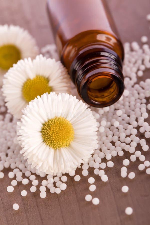 Glóbulo homeopático de la manzanilla fotos de archivo