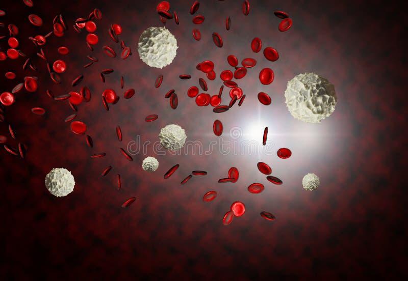 Glóbulos rojos y blancos foto de archivo libre de regalías