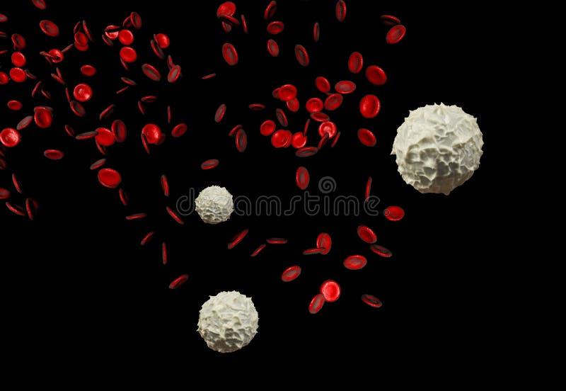 Glóbulos rojos y blancos fotos de archivo