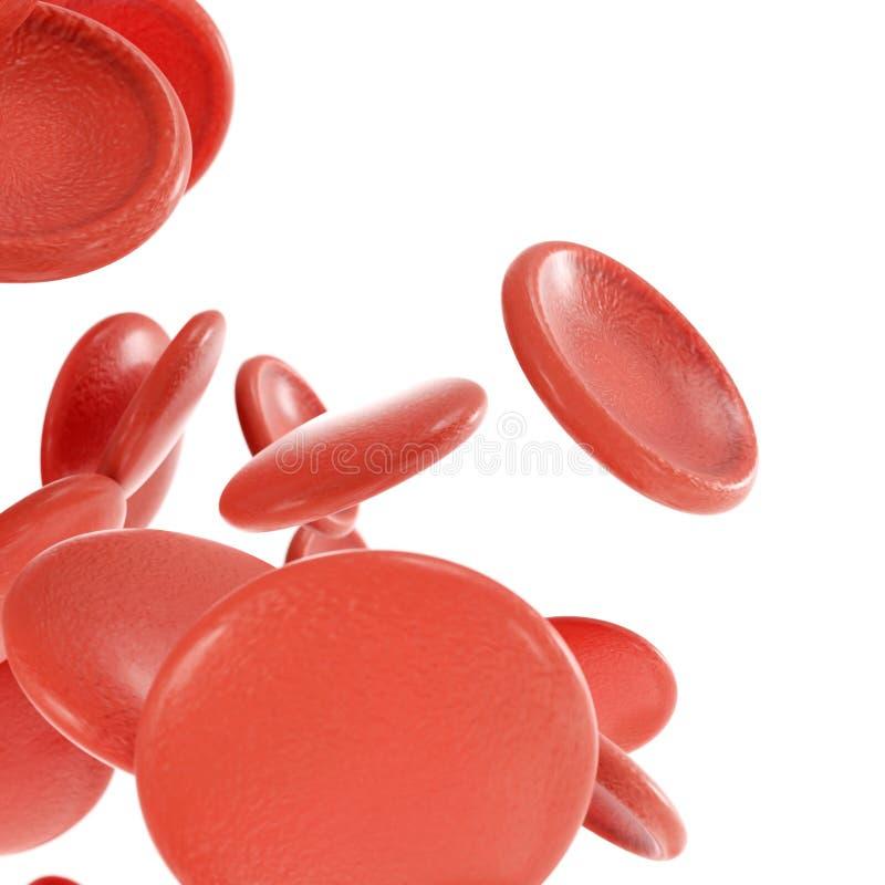 Glóbulos vermelhos isolados no fundo branco ilustração stock
