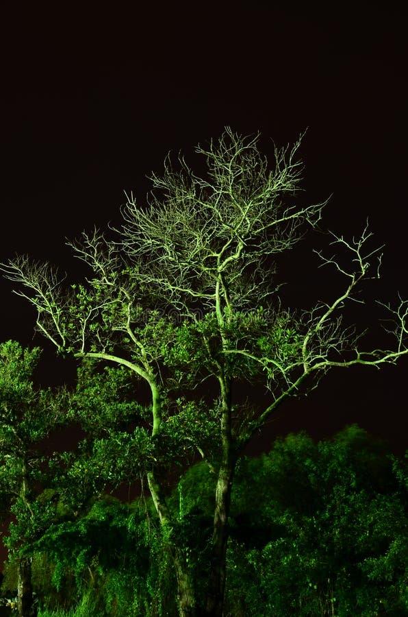 Glöd i det mörka trädet royaltyfria foton