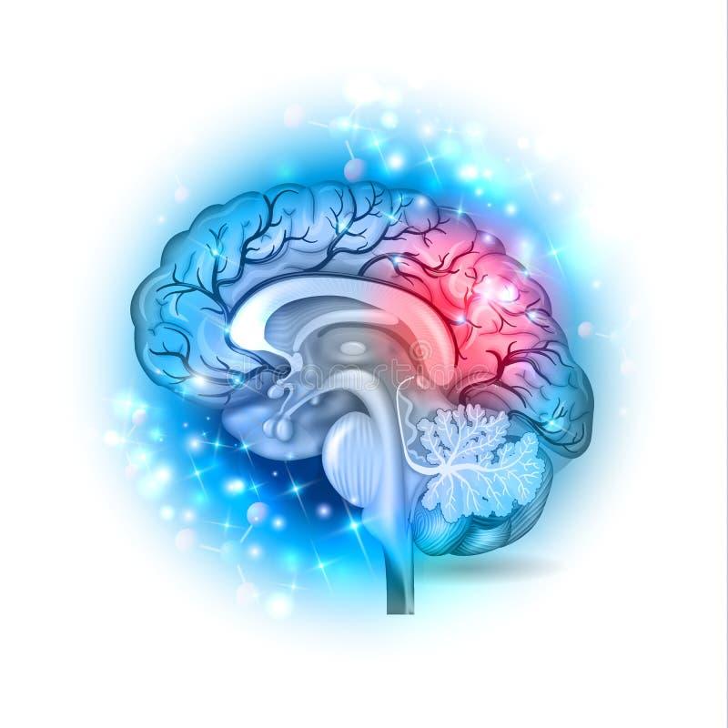 Glödande bakgrund för mänsklig hjärna vektor illustrationer