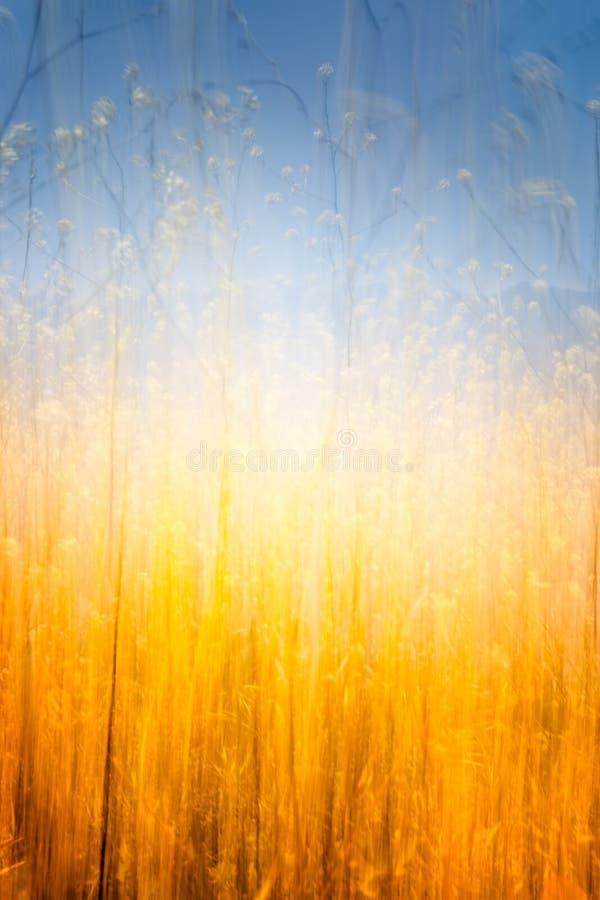 Glödande fält av brunt gräs arkivfoton