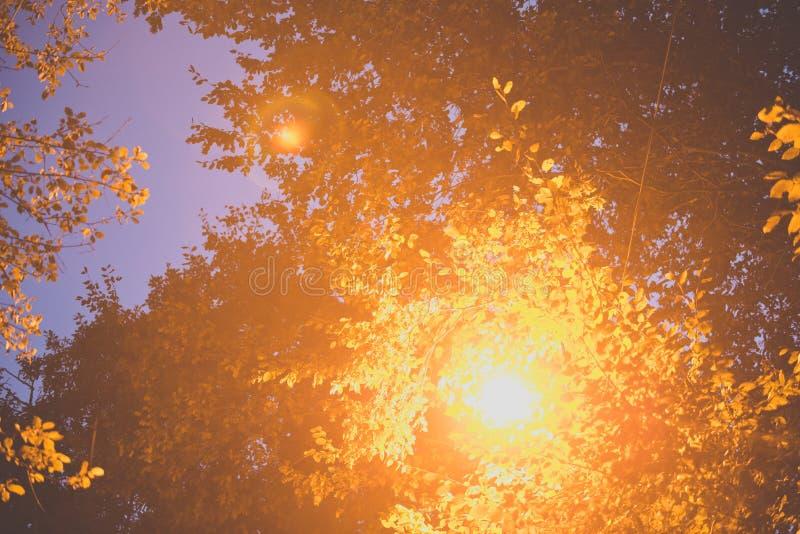 Glödande gatalampa bland sidorna av ett träd arkivfoton