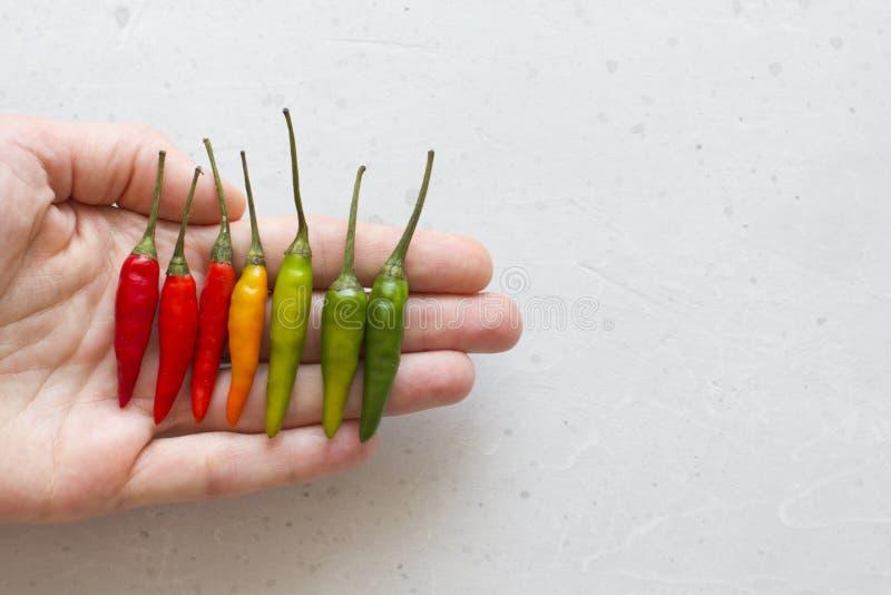 Gl?dheta Chili Peppers i handen p? bakgrund eller den vita tabellen Mycket peppar f?r r?d chili Gr?na gula varma Chili Peppers ko arkivbilder