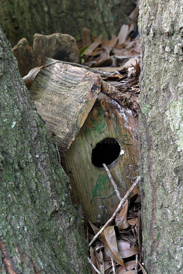 Download Glömd birdhouse fotografering för bildbyråer. Bild av gammalt - 38043