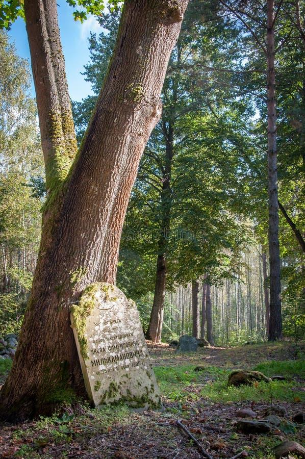 Glömd gravsten som bara står i en skog royaltyfri fotografi