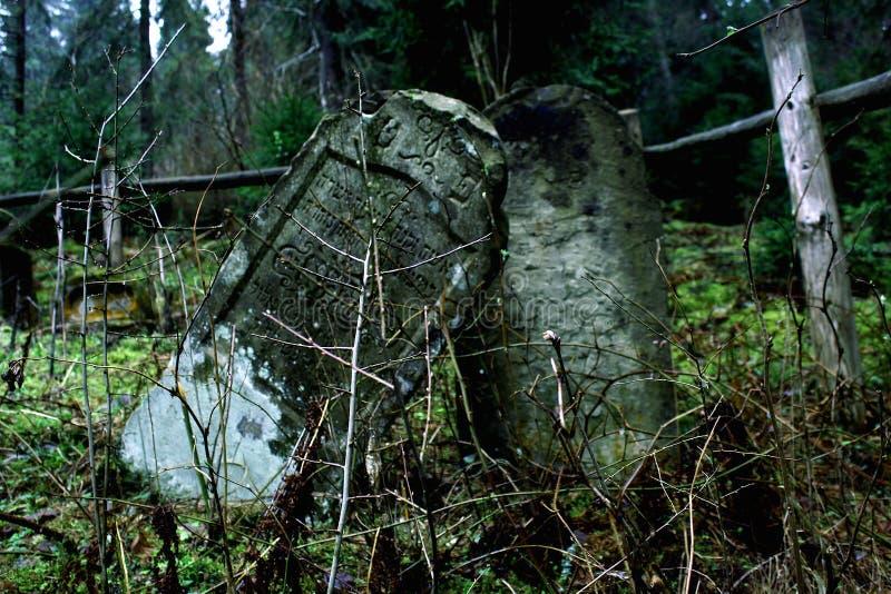 Glömd matzevot i skogen arkivfoton