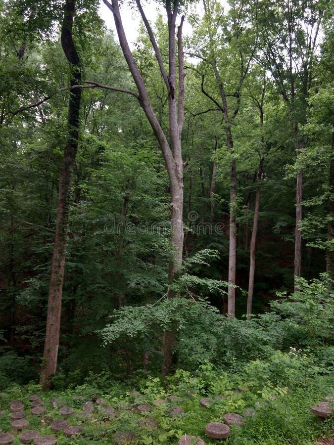 glömd skog royaltyfri fotografi
