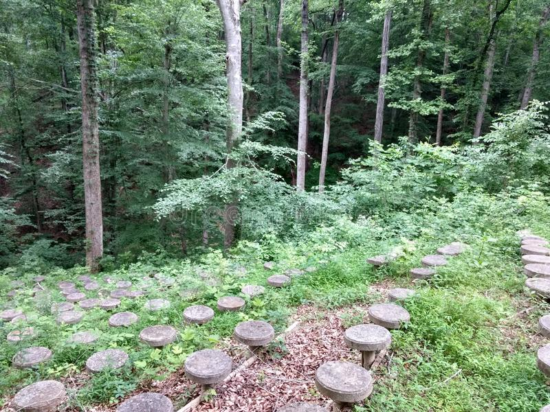 glömd skog arkivfoton