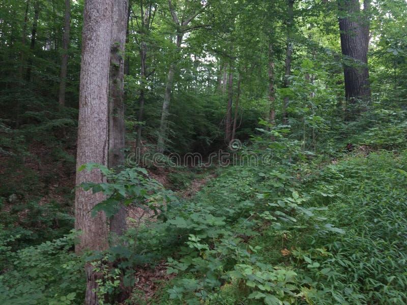 glömd skog royaltyfria bilder