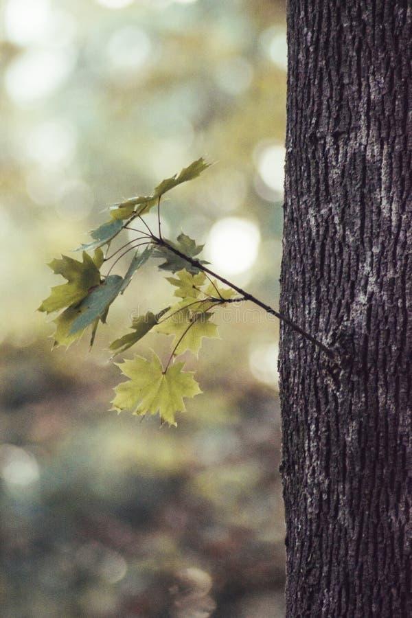 Glömde Autumn Leaf arkivfoton