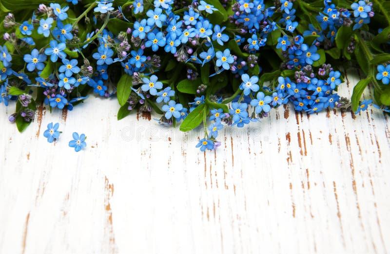 Glömma-mig-nots blommor arkivfoto