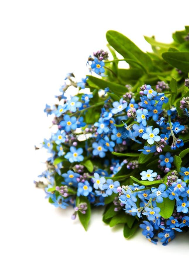 Glömma-mig-nots blommor royaltyfri bild