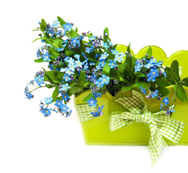 Glömma-mig-nots blommor royaltyfri fotografi